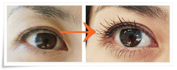 cellula-eyelash